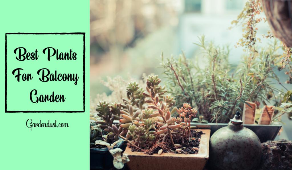 10 Best Plants For Balcony Garden in India
