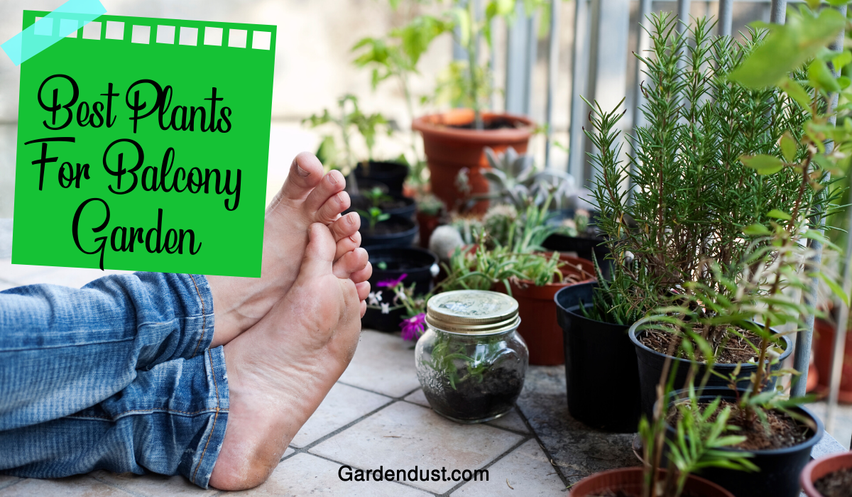 10 Best Plants For Balcony Garden in India