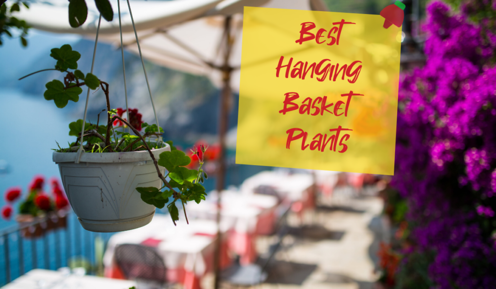 Best Hanging Basket Plants